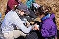 Biologists attach a tracker to a long-tailed jaeger (572f9b3c-d703-418d-b762-706d152bb11f).jpg