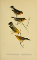 Bird-Lore-5-6 0203.png