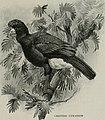 Bird-lore (1914) (14753070294).jpg