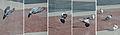 Bird Landing (3396307330).jpg