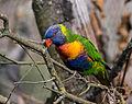 Birdy (15191015818).jpg
