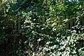 Black Lion High Roding, beer garden overgrown fence, Essex, England.jpg
