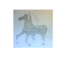 Black and white horse small.png