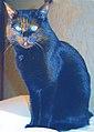 Black cat sitting.jpg
