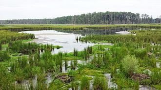 Blackwater National Wildlife Refuge - view of Blackwater NWR near the observation platform off the wildlife drive