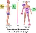 Blausen 0019 AnatomicalDirectionalReferences-Arabic-YM.png