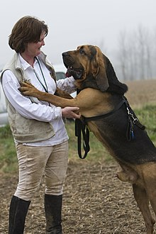 Bloodhound Trials Feb 2008 -63 (2299861445).jpg