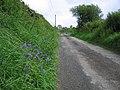Bluebells in the verge - geograph.org.uk - 1306118.jpg
