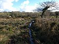 Boggy ground, Badgall Downs - geograph.org.uk - 721076.jpg
