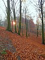 Bokskogen i solnedgång.jpg