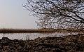 Boom aan IJsselmeerkust. Locatie Mirnser Klif 03.JPG