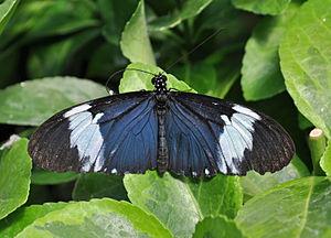 Bornholm Butterfly Park - Image: Bornholms Sommerfuglepark og Tropeland Nexø, Bornholm (2012 07 05), by Klugschnacker in Wikipedia (7)