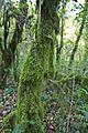 Bosque - Bertamirans - Rio Sar - 026.jpg