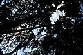 Bosque - panoramio (16).jpg
