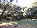 Bosque Jardin Botanico - Iosef Tzemaj.JPG