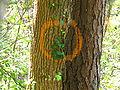Bosque de Oma (35).JPG