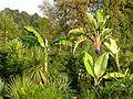 Botanični vrt (3990167167).jpg