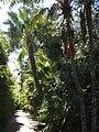 Botanical garden of Valencia 07.jpg