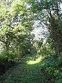 Boundary, Plashett Wood - geograph.org.uk - 1425328.jpg