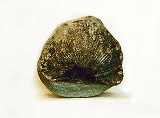 <i>Strophomena</i> genus of brachiopods (fossil)