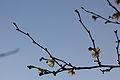 Branches en fleur, décembre.JPG