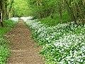 Bridleway, Verditch Chase - geograph.org.uk - 1285591.jpg