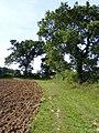 Bridleway between Transport Lane and Hales Hall - geograph.org.uk - 1744508.jpg