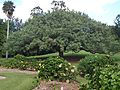 Brisbane City Botanic Gardens (11).jpg
