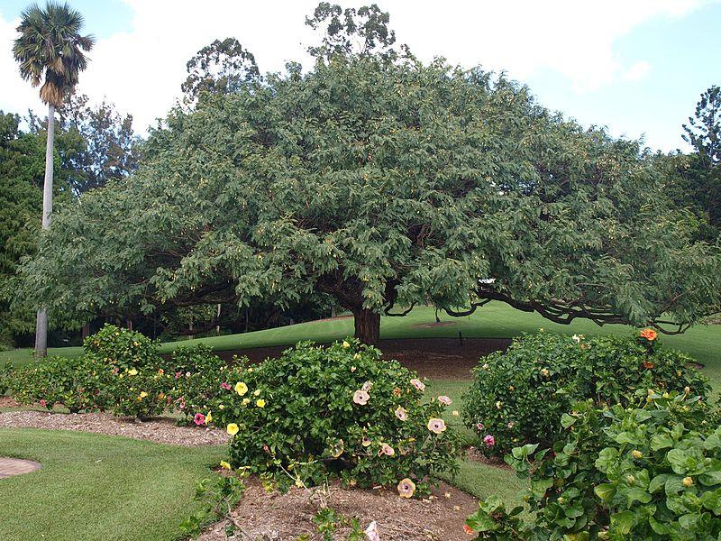 File:Brisbane City Botanic Gardens (11).jpg
