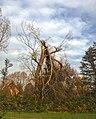 Broken tree 01.jpg