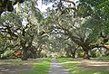 Brookgreen Gardens Oak Alley1.jpg