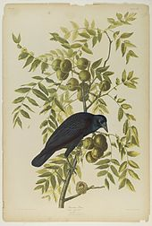 Image result for John Audubon Day