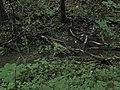 Bubovice-Srbsko - panoramio (53).jpg