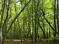 Busgrove Wood - geograph.org.uk - 594866.jpg