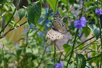Buttefly3.jpg