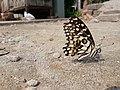 Butterfly20171025 124013.jpg