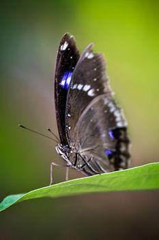 Butterfly bokeh.jpg