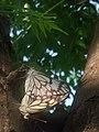 Butterfly coupling.jpg