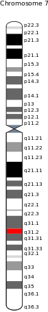 CFTR gene on chromosome 7.svg