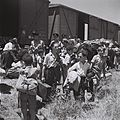 CHILDREN RESCUED FROM THE NAZI CAMPS ARRIVING AT THE ATLIT RECEPTION CAMP BY TRAIN. ילדים, ניצולי שואה, יורדים מהרכבת במחנה המעבר לעולים בעתלית.D820-070.jpg