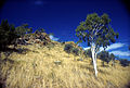 CSIRO ScienceImage 1769 Central Australian Landscape.jpg