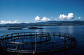 CSIRO ScienceImage 2686 Salmon Cages.jpg