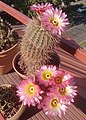 Cactus IMG 1910.jpg