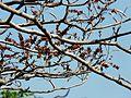 Cakkatheekk (Malayalam- ചക്കതേക്ക്) (3093445510).jpg