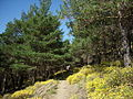 Camino a Busquístar entre pinos (12859681074).jpg