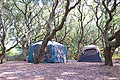Campsite with two tents under love oaks first landing state park (28383426698).jpg