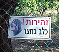 Canonical guard dog sign, Capernaum (501593876).jpg