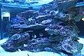 Capetown - Two Oceans Aquarium IMG 9433.JPG