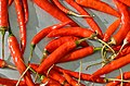 Capsicum - red chili chilli - piment rouge - roter Chili 02.jpg