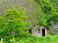 Casa de madeira antiga abandonada em meio à mata. - panoramio.jpg